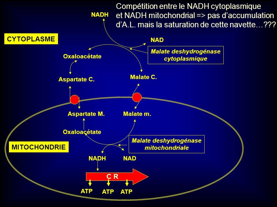 Malate m. Oxaloacétate Aspartate M. Malate C. Aspartate C. Oxaloacétate NAD NADH NAD C R ATP Malate deshydrogénase mitochondriale Malate deshydrogénas