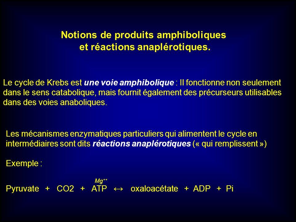 Notions de produits amphiboliques et réactions anaplérotiques. Le cycle de Krebs est une voie amphibolique : Il fonctionne non seulement dans le sens