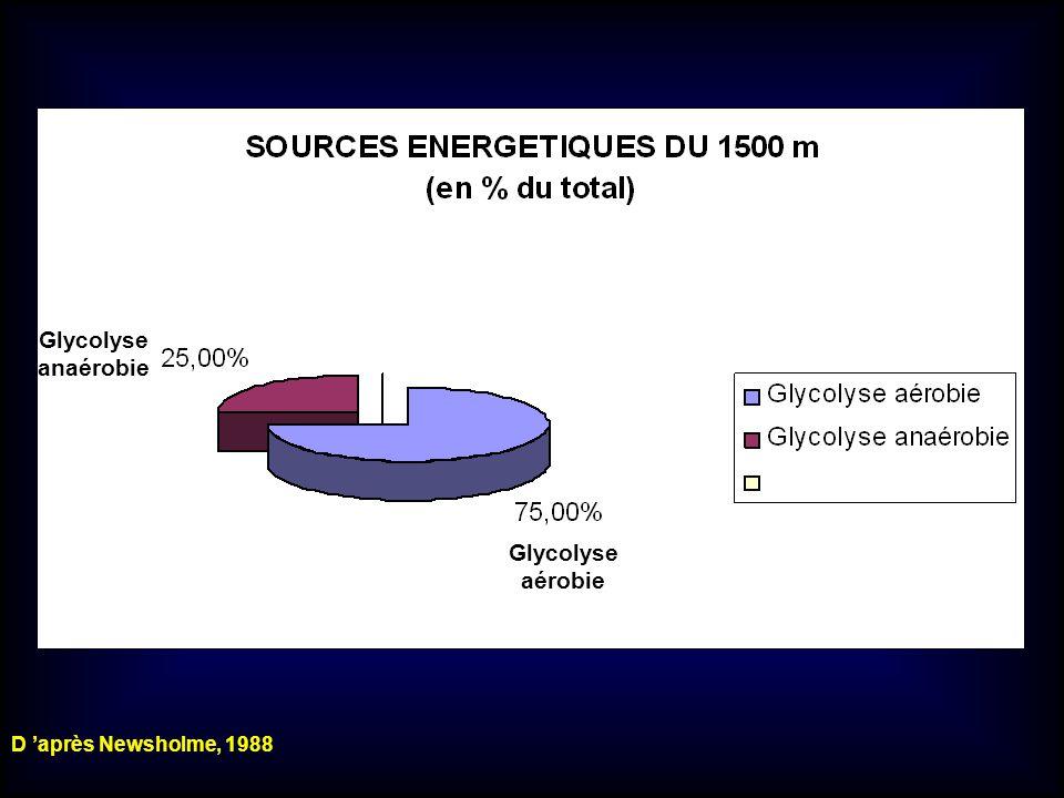 Glycolyse aérobie Glycolyse anaérobie D après Newsholme, 1988