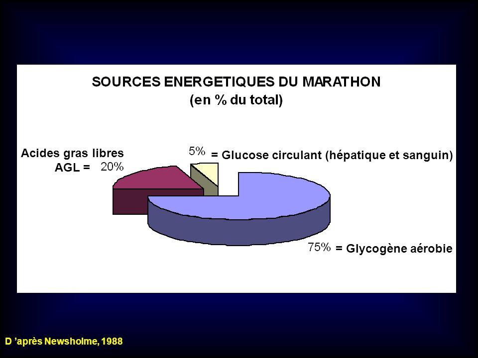 = Glycogène aérobie = Glucose circulant (hépatique et sanguin) Acides gras libres AGL = D après Newsholme, 1988