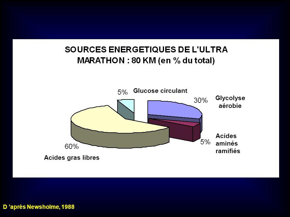 Glycolyse aérobie Acides aminés ramifiés Glucose circulant Acides gras libres D après Newsholme, 1988