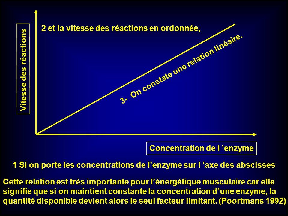 Vitesse des réactions Concentration de l enzyme Cette relation est très importante pour lénergétique musculaire car elle signifie que si on maintient
