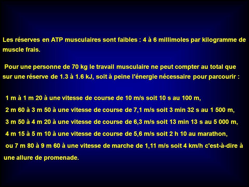 Les réserves en ATP musculaires sont faibles : 4 à 6 millimoles par kilogramme de muscle frais. Pour une personne de 70 kg le travail musculaire ne pe