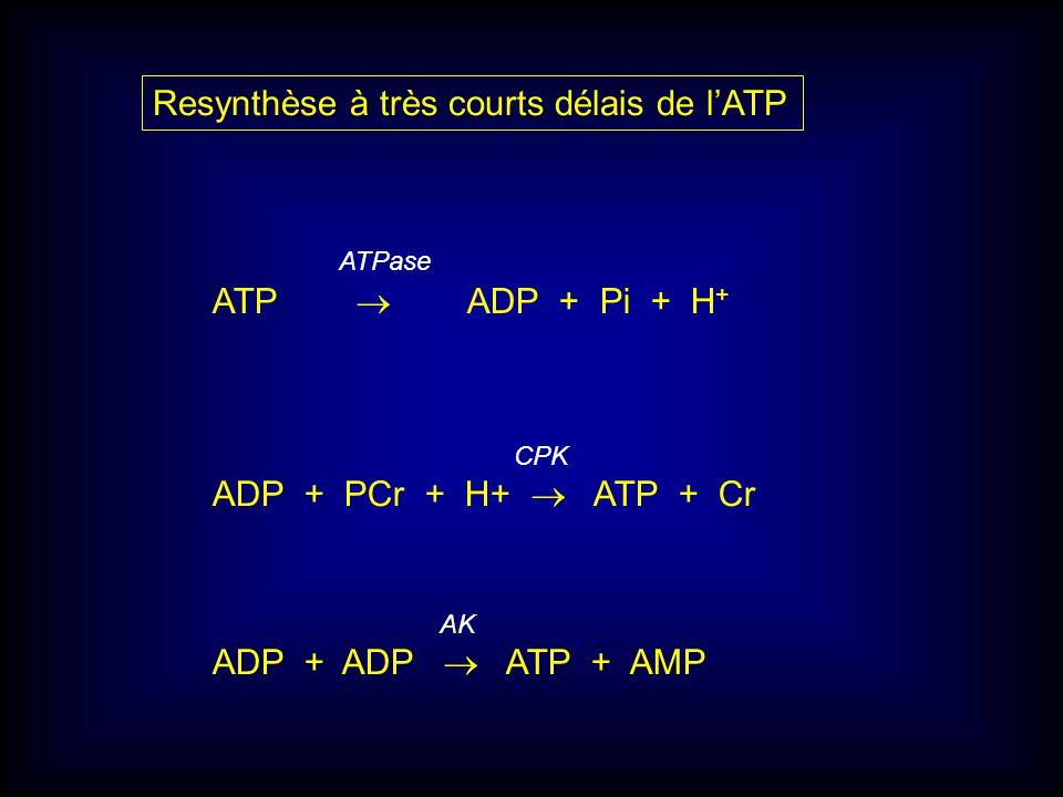 ATPase ATP ADP + Pi + H + CPK ADP + PCr + H+ ATP + Cr AK ADP + ADP ATP + AMP Resynthèse à très courts délais de lATP