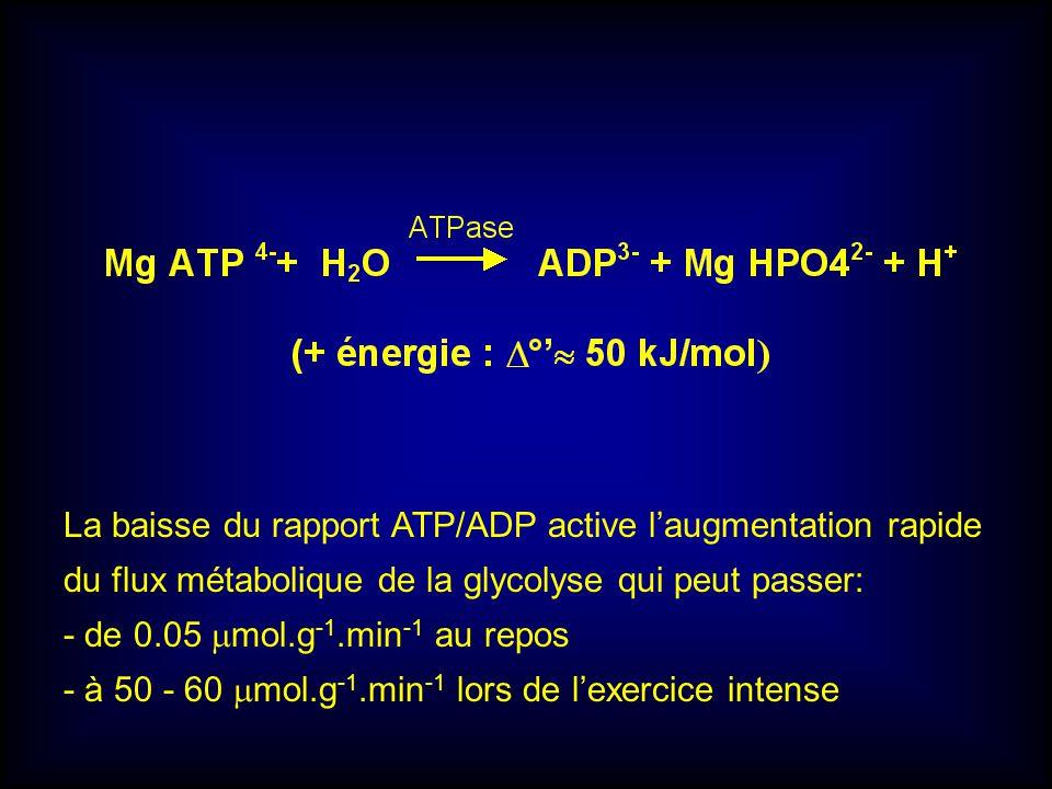 La baisse du rapport ATP/ADP active laugmentation rapide du flux métabolique de la glycolyse qui peut passer: - de 0.05 mol.g -1.min -1 au repos - à 5