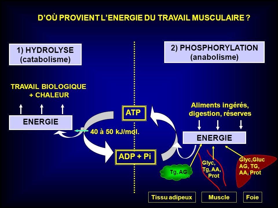ENERGIE Aliments ingérés, digestion, réserves 1) HYDROLYSE (catabolisme) 2) PHOSPHORYLATION (anabolisme) TRAVAIL BIOLOGIQUE + CHALEUR ATP ADP + Pi DOÙ