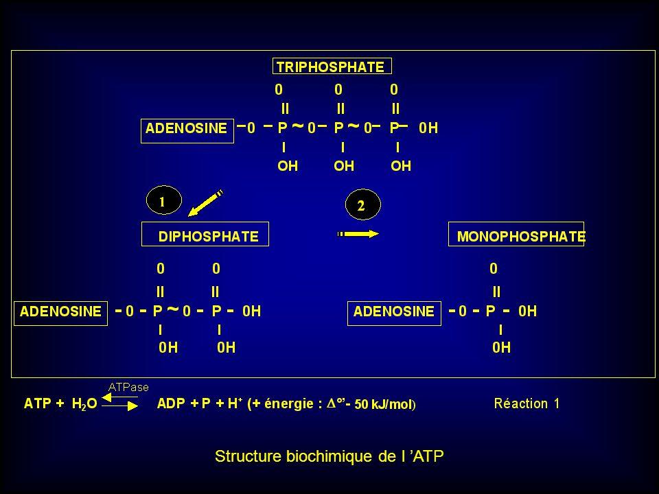 Structure biochimique de l ATP
