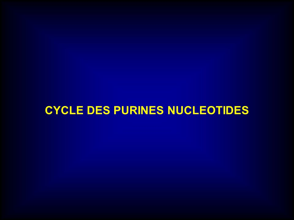 CYCLE DES PURINES NUCLEOTIDES