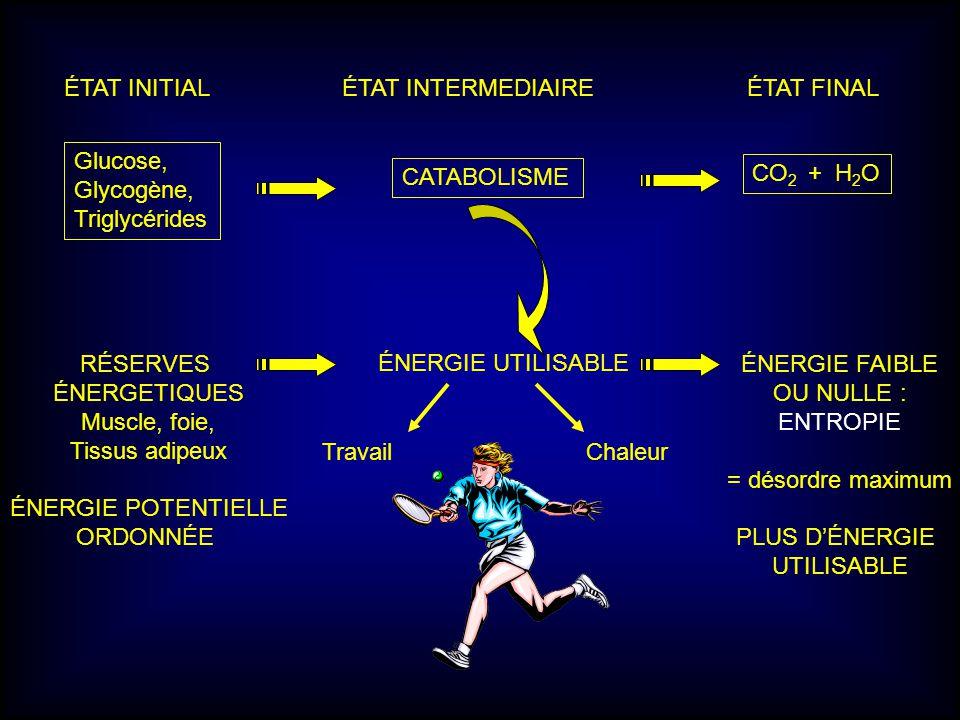 ÉTAT INITIAL ÉTAT INTERMEDIAIRE ÉTAT FINAL Glucose, Glycogène, Triglycérides CATABOLISME CO 2 + H 2 O ÉNERGIE UTILISABLE RÉSERVES ÉNERGETIQUES Muscle,