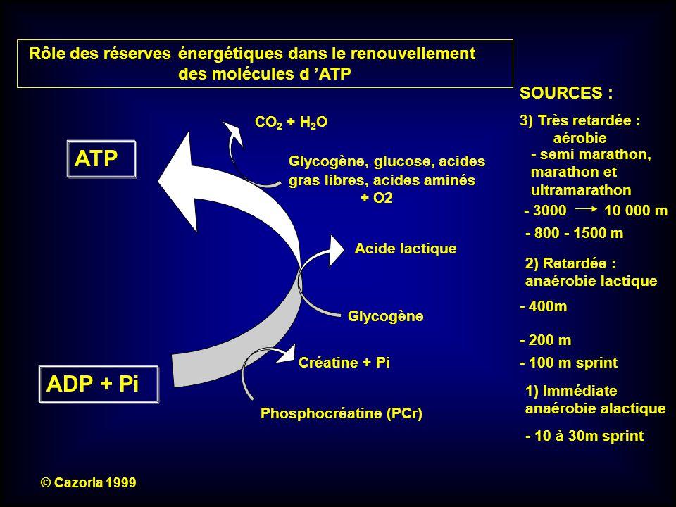 ATP ADP + Pi Glycogène, glucose, acides gras libres, acides aminés + O2 © Cazorla 1999 Créatine + Pi Phosphocréatine (PCr) 1) Immédiate anaérobie alac
