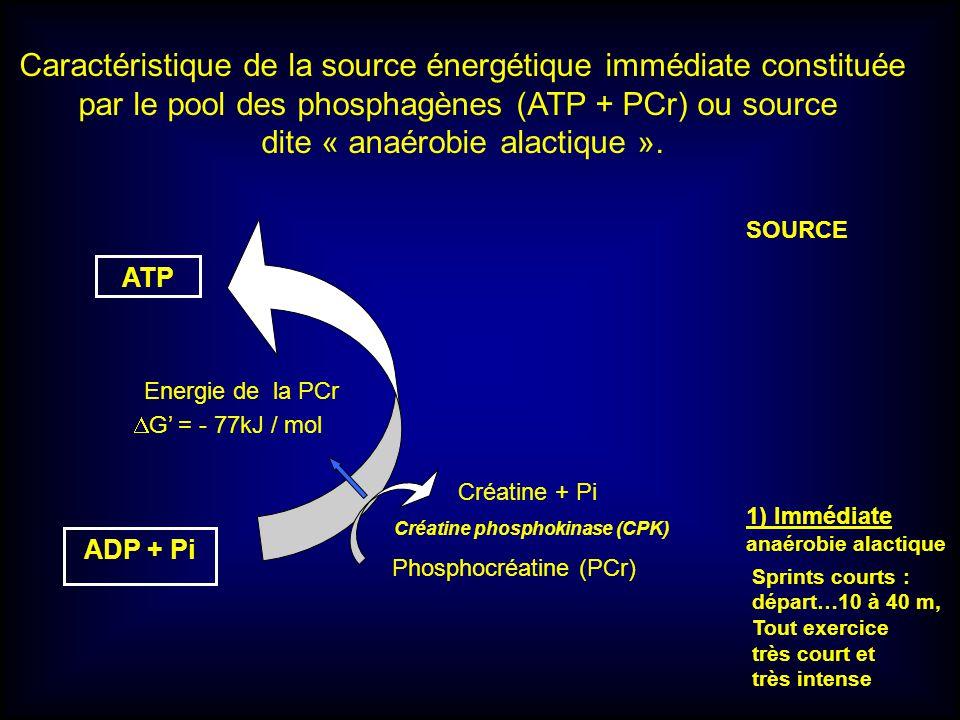 ATP Créatine phosphokinase (CPK) Energie de la PCr G = - 77kJ / mol ADP + Pi Créatine + Pi Phosphocréatine (PCr) Caractéristique de la source énergéti