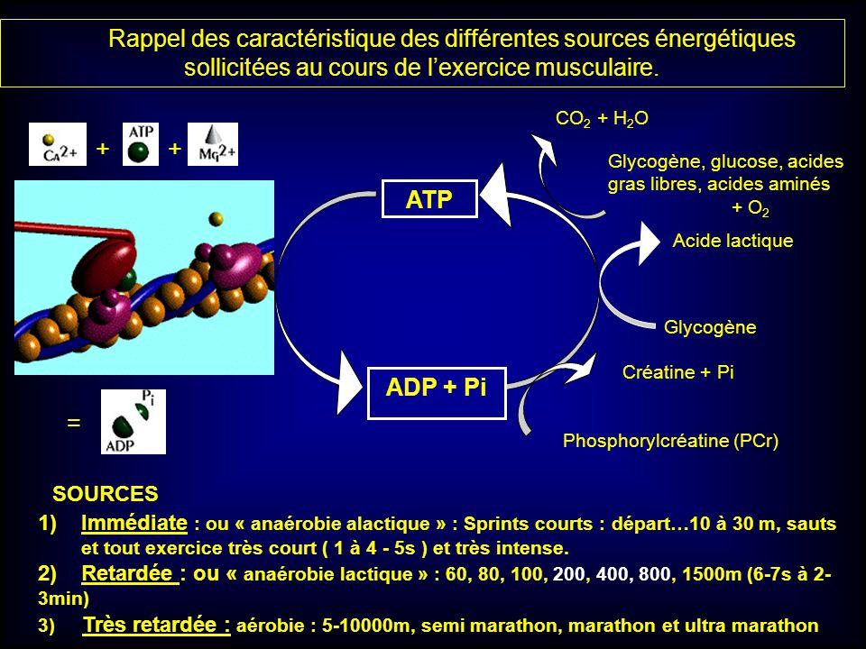 ATP ADP + Pi Créatine + Pi Phosphorylcréatine (PCr) Rappel des caractéristique des différentes sources énergétiques sollicitées au cours de lexercice