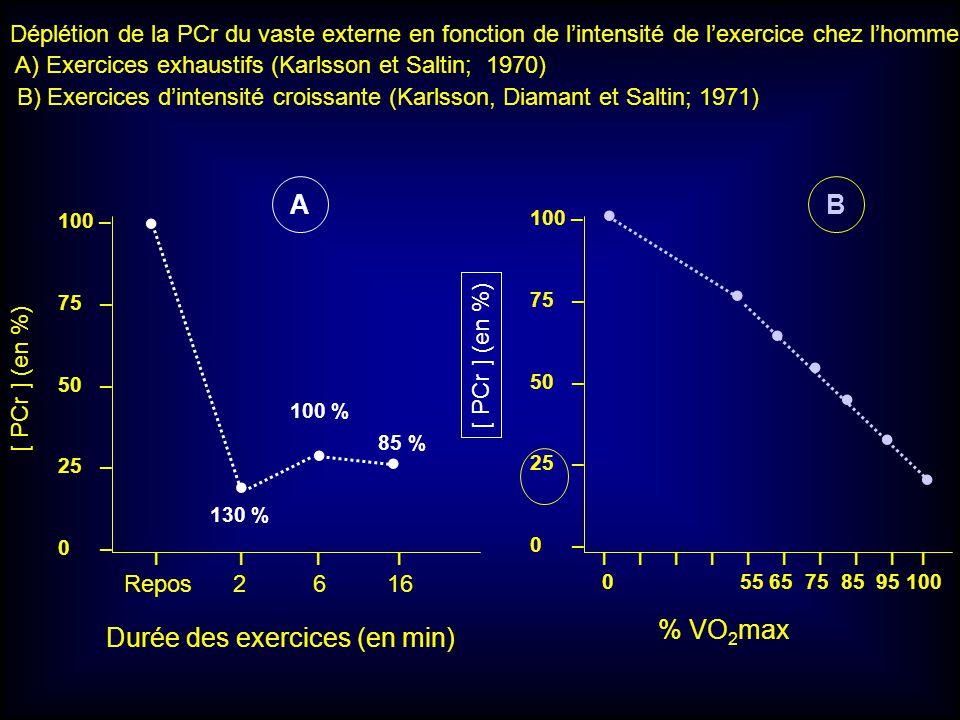 100 – 75 – 50 – 25 – 0 – I I I I Repos 2 6 16 130 % 100 % 85 % [ PCr ] (en %) I I I I I 0 55 65 75 85 95 100 Durée des exercices (en min) % VO 2 max D
