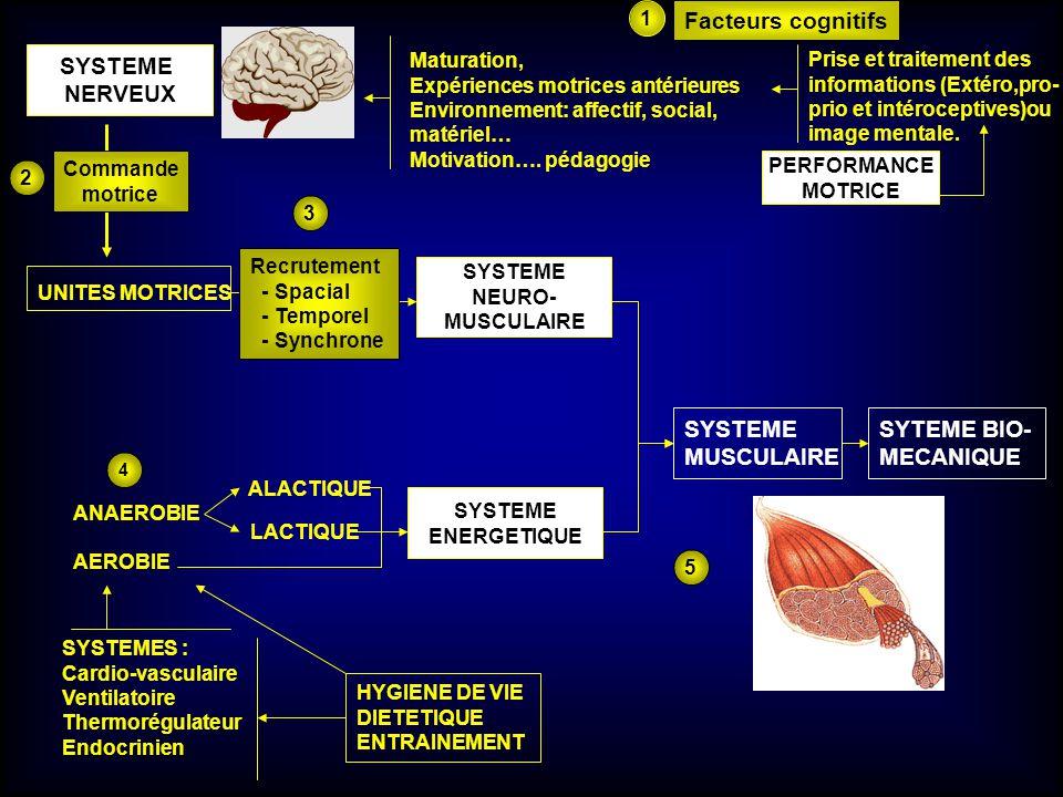 SYSTEME NERVEUX UNITES MOTRICES SYSTEME NEURO- MUSCULAIRE SYSTEME ENERGETIQUE ANAEROBIE AEROBIE ALACTIQUE LACTIQUE PERFORMANCE MOTRICE Maturation, Exp
