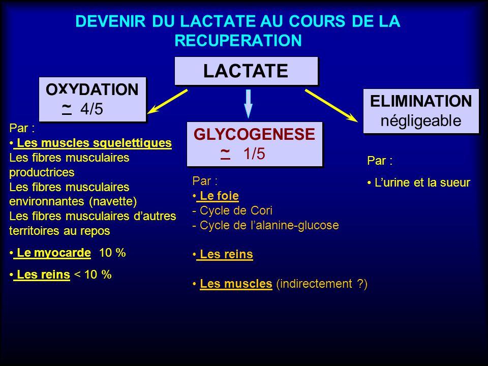 DEVENIR DU LACTATE AU COURS DE LA RECUPERATION LACTATE OXYDATION 4/5 OXYDATION 4/5 GLYCOGENESE 1/5 GLYCOGENESE 1/5 ELIMINATION négligeable ELIMINATION