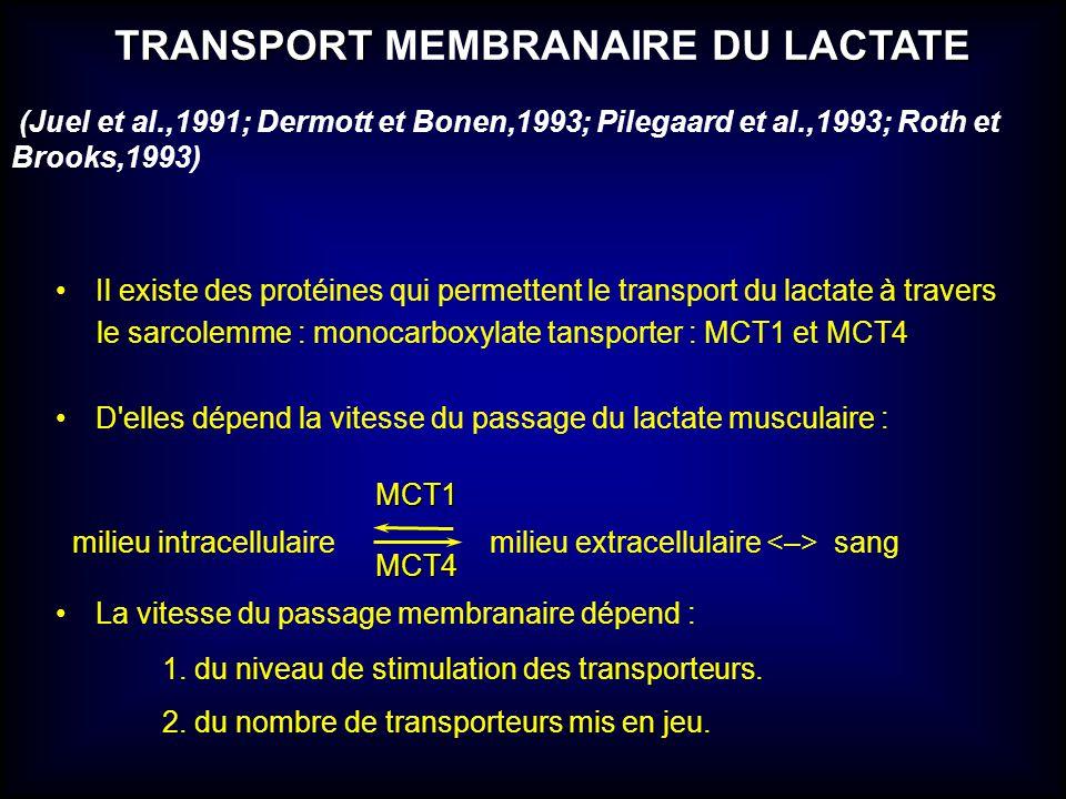TRANSPORT DU LACTATE TRANSPORT MEMBRANAIRE DU LACTATE Il existe des protéines qui permettent le transport du lactate à travers le sarcolemme : monocar