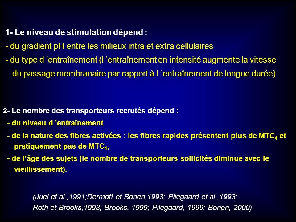 2- Le nombre des transporteurs recrutés dépend : - du niveau d entraînement - de la nature des fibres activées : les fibres rapides présentent plus de