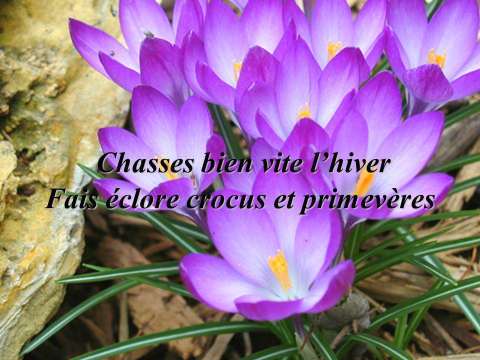 Joli printemps reviens