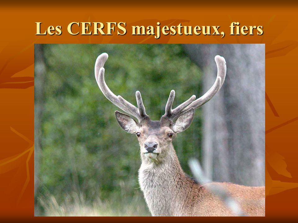 Les CERFS majestueux, fiers