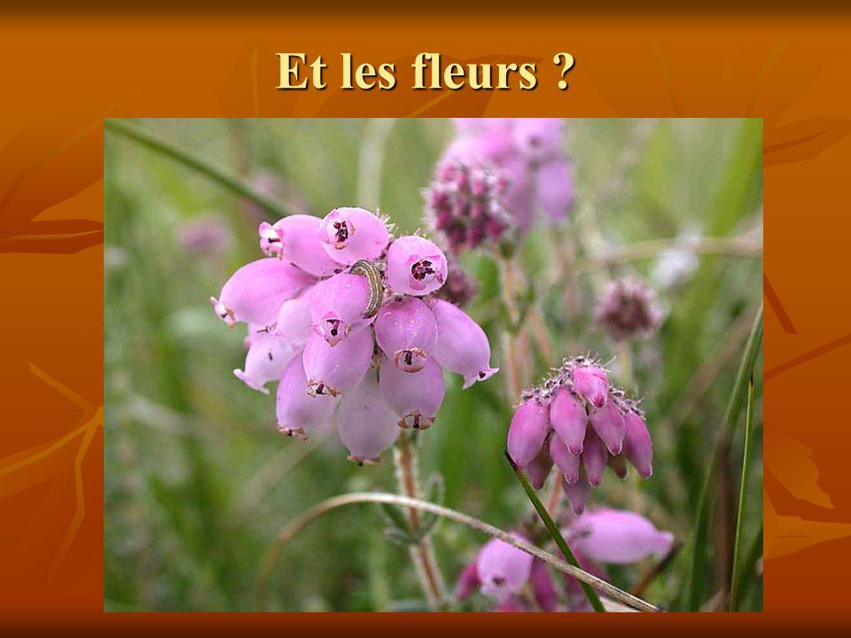 Et les fleurs ?