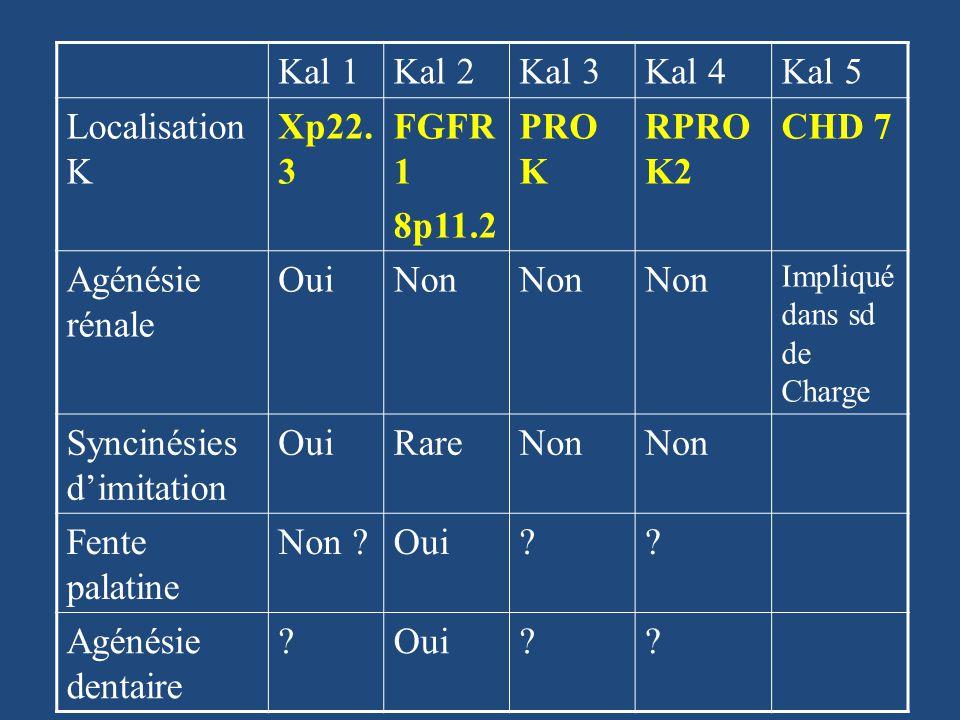 Kal 1Kal 2Kal 3Kal 4Kal 5 Localisation K Xp22. 3 FGFR 1 8p11.2 PRO K RPRO K2 CHD 7 Agénésie rénale OuiNon Impliqué dans sd de Charge Syncinésies dimit