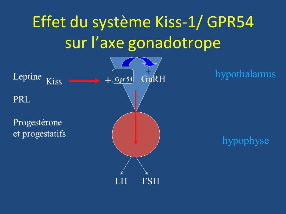 Effet du système Kiss-1/ GPR54 sur laxe gonadotrope Kiss + GnRH Gpr 54 + LH FSH hypophyse hypothalamus Leptine PRL Progestérone et progestatifs