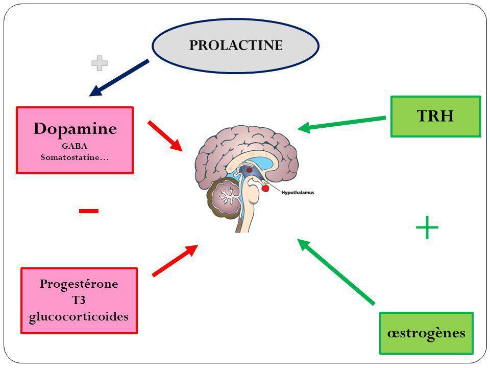 TRH œstrogènes Dopamine GABA Somatostatine… Progestérone T3 glucocorticoides PROLACTINE