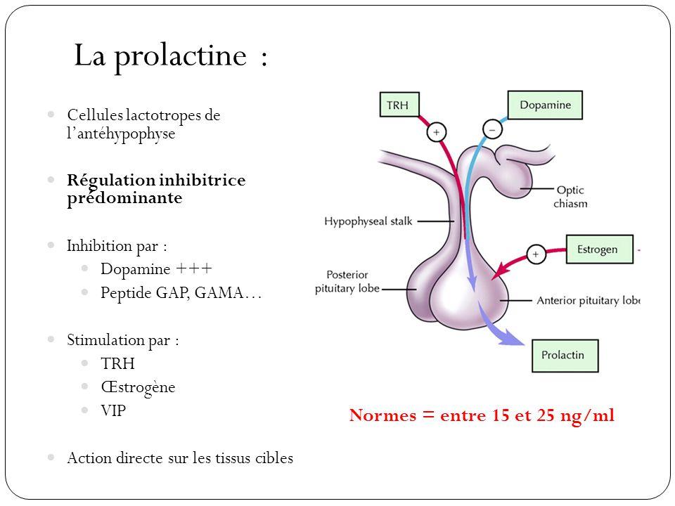 La prolactine : Cellules lactotropes de lantéhypophyse Régulation inhibitrice prédominante Inhibition par : Dopamine +++ Peptide GAP, GAMA… Stimulatio