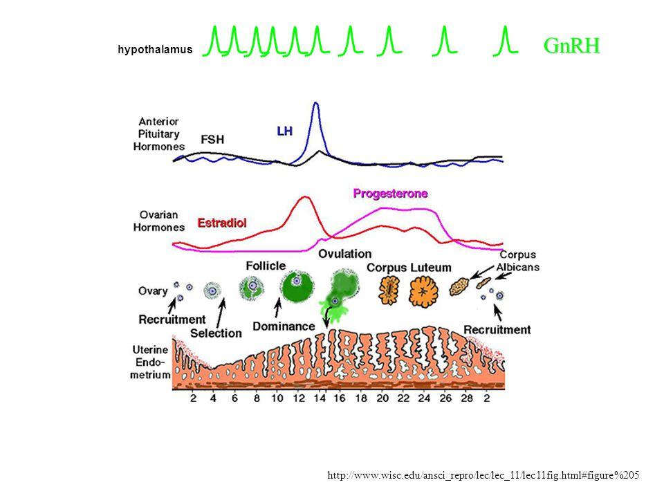 GnRH Activin B LH/FSH E 2 /P 4 Inhibin A/B Brain Pituitary Follistatin Ovary Hypothalamo-pituitary-ovarian axis