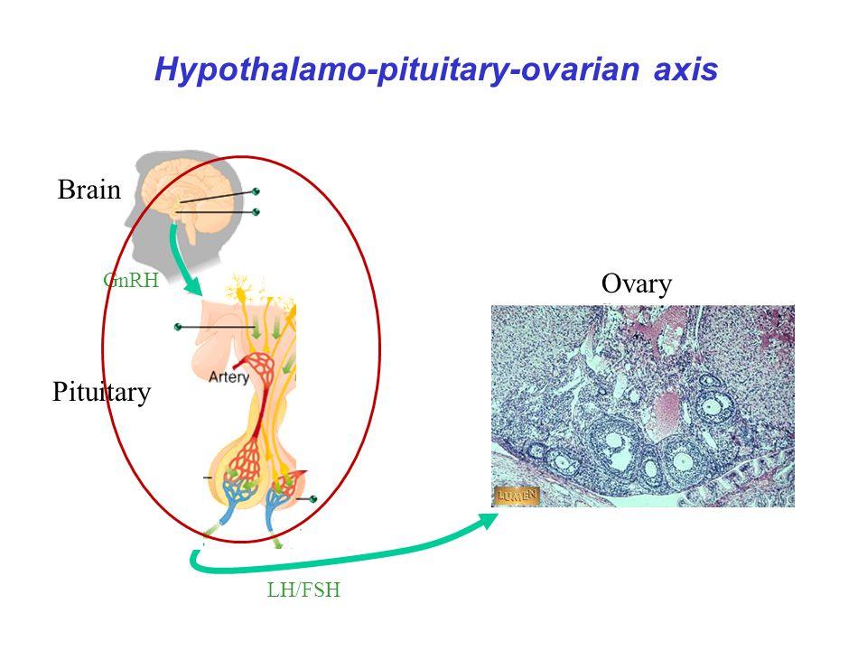 GnRH Activin B LH/FSH E 2 /P 4 Inhibin A/B Brain Pituitary Follistatin Ovary rétrocontrole 1 stéroides
