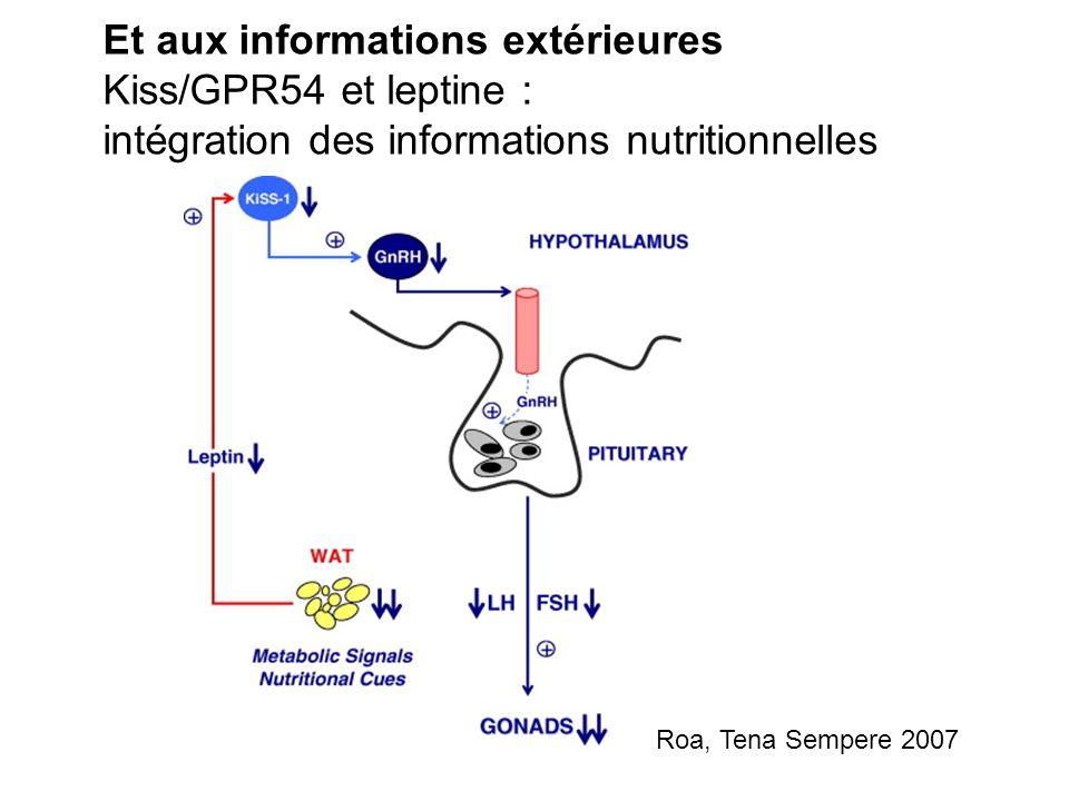 Et aux informations extérieures Kiss/GPR54 et leptine : intégration des informations nutritionnelles Roa, Tena Sempere 2007