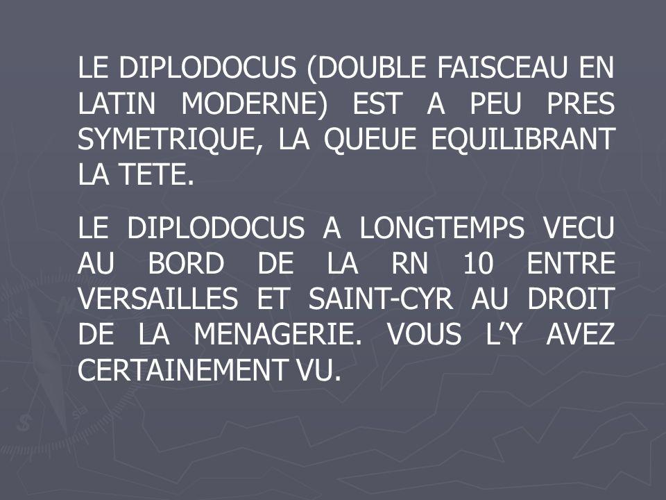 LE DIPLODOCUS (DOUBLE FAISCEAU EN LATIN MODERNE) EST A PEU PRES SYMETRIQUE, LA QUEUE EQUILIBRANT LA TETE. LE DIPLODOCUS A LONGTEMPS VECU AU BORD DE LA