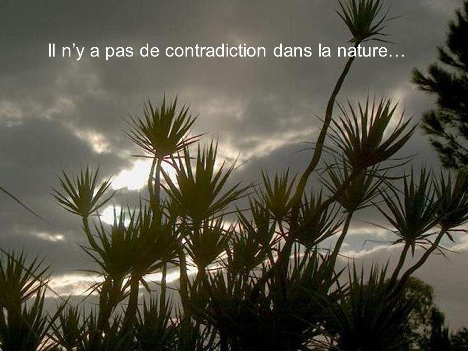 Il ny a pas de contradiction dans la nature…