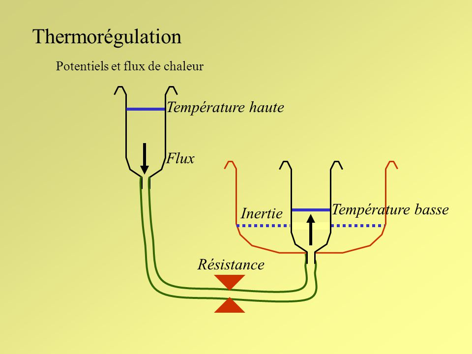 Thermorégulation Réponse de divers neurones de lhypothalamus aux stimuli périphériques Neurones sensibles aux températures élevées (30%, diffus) Stimulation périphérique chaude => Stimulation périphérique froide => néant Neurones sensibles aux températures basses (10%, central) Stimulation périphérique froide => Stimulation périphérique chaude => CONVERGENCE DES PROPRIETES PERIPHERIQUES ET CENTRALES: VOIES DE LA THERMOGENESE # VOIES DE LA THERMOLYSE Séparation anatomique