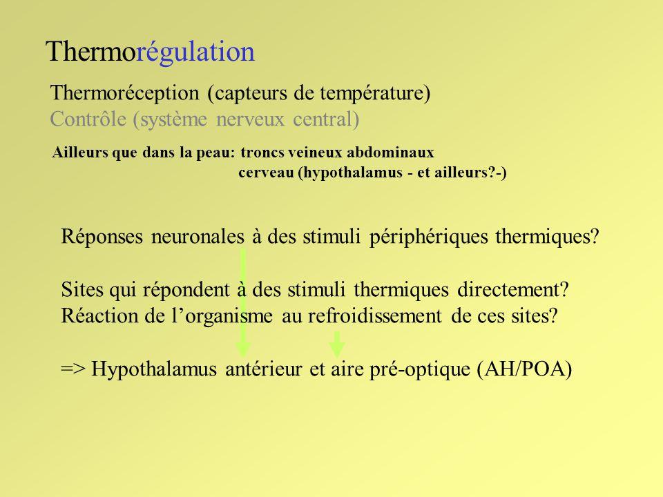 Thermorégulation Thermoréception (capteurs de température) Contrôle (système nerveux central) Ailleurs que dans la peau: troncs veineux abdominaux cer
