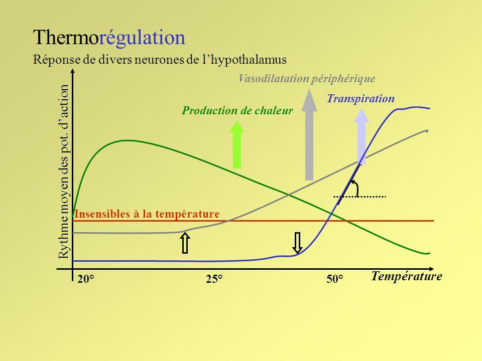 Thermorégulation Température 20°25°50° Rythme moyen des pot. daction Réponse de divers neurones de lhypothalamus Insensibles à la température Vasodila