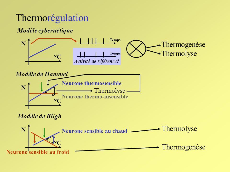 Thermorégulation Modèle cybernétique N °C Temps Activité de référence? Thermogenèse Thermolyse N °C N Modèle de Hammel Modèle de Bligh Neurone thermos