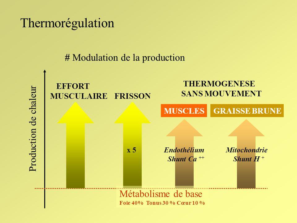 Thermorégulation # Modulation de la production Production de chaleur FRISSON EFFORT MUSCULAIRE x 5 THERMOGENESE SANS MOUVEMENT MUSCLESGRAISSE BRUNE En