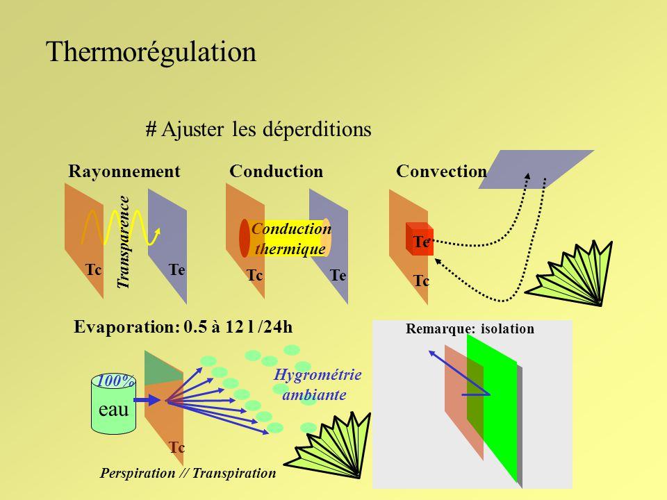 Thermorégulation Répartition de leau chaude dans lorganisme Noyau Cerveau // Coeur Ecorce Milieu ambiant 36°5 à 37°5 10° à 45° Calories Shunt Muscles Vaisseaux Transpiration (1 à 20x) Fin de la première heure de cours Evaporation: 0,5 à 12 litres / 24h 2,5 M joule/ litre (100 glandes sudoripares / cm2)