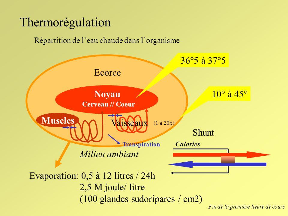 Thermorégulation Répartition de leau chaude dans lorganisme Noyau Cerveau // Coeur Ecorce Milieu ambiant 36°5 à 37°5 10° à 45° Calories Shunt Muscles