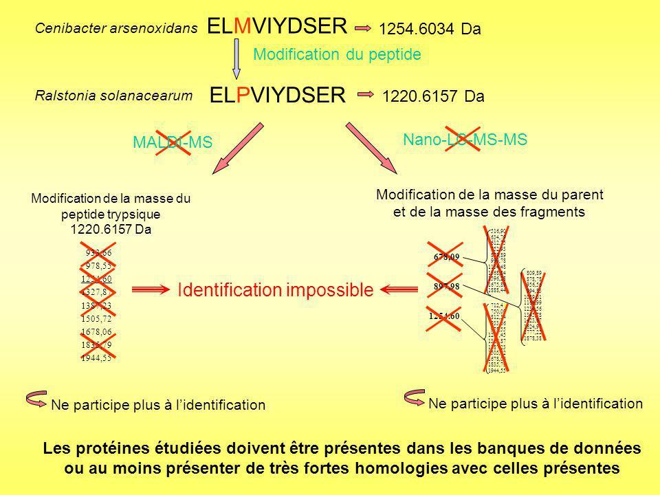 Recours à une stratégie de séquençage de novo des spectres MS/MS Déduction dun tag de séquence en acides aminés : QGMEAWDGPALLLFSDGR