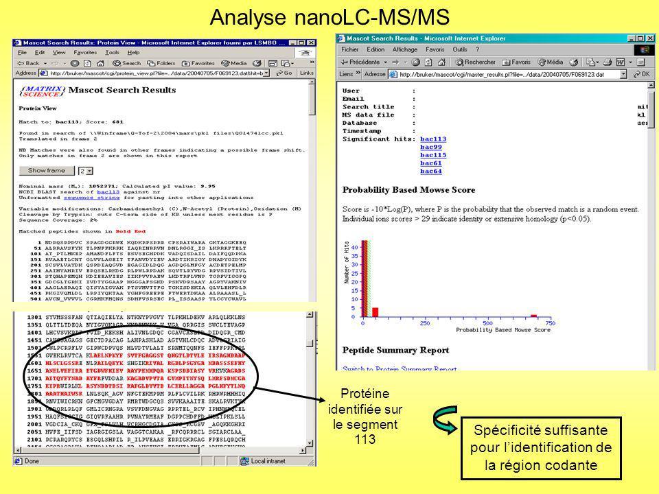 Identification de la fonction Extraction des peptides identifiés et soumission au MS-BLAST Souvent par homologie chez Ralstonia solanacearum Identification de la fonction de la protéine