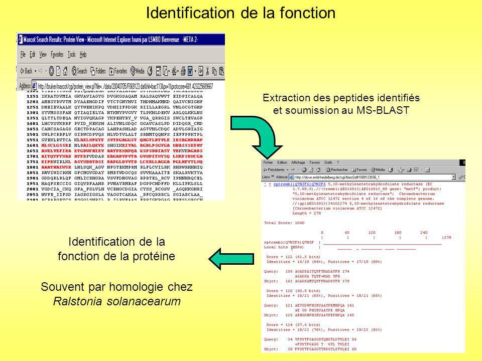 Analyse MALDI-TOF-MS et recherche par « empreinte peptidique massique » Pas didentification possible car beaucoup de faux positifs !