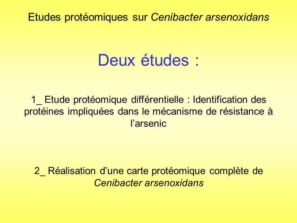 1_Etude différentielle avec/sans arsenic par gel 2D puis analyse par nanoLC-MS/MS Comparaison des gels 2D des extraits cytoplasmiques de cultures réalisées en présence/absence darsenic : Sélection de 22 spots différentiellement exprimés