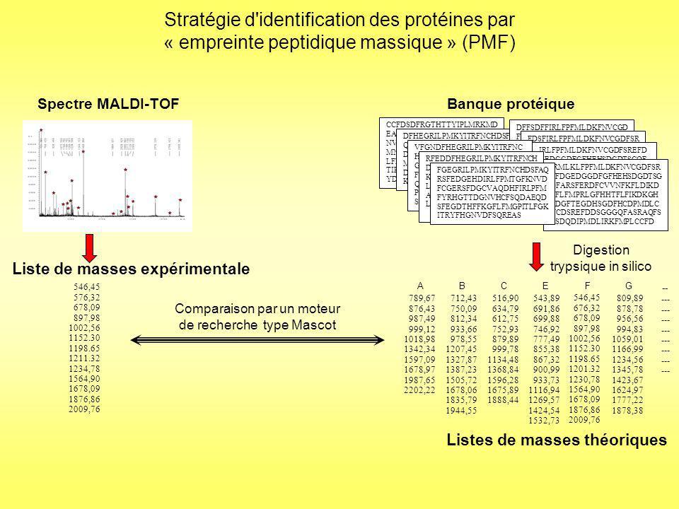 Stratégie d identification des protéines par « empreinte peptidique massique » (PMF) Banque protéique CCFDSDFRGTHTTYIPLMRKMD EASCVNFJRPQSDGHLKITYPM NVCDSDFRAQSDFERTGGHPL MNVFFRDSQACVSDEFRHKITP LFMDLMFPRTEQASSCVFHDNR TIPLYMTIFKGSREFDYAGSRHE YD DFHEGRILPMKYITRFNCHDSFA QRSFEDGEHDIRLFPMTGFKNV DFCGERSFDGCVAQDHFIRLPF MFYRHGTTDGNVHCFSQDAEQ DSFEGDTHFFKGFLFMGPITLFG KITRYFHGNVDFSQREAS DFFSDFFIRLFPFMLDKFNVCGD FSREFDGEDGGDFGFHEHSDGD TSGQFARSFERDFCVVNFKFLDI KDLFLFMPRLGFHHTFLFIKDK GHRDGFTEGDHSGDFHCDPMD LCNCDSREFDDSGGGQFASRAQ FSRSDQDIPMDLIRKFMPLCCFD FDSFIRLFPFMLDKFNVCGDFSR EFDGEDGGDFGFHEHSDGDTSG QFARSFERDFCVVNFKFLDIKD LFLFMPRLGFHHTFLFIKDKGH RDGFTEGDHSGDFHCDPMDLC NCDSREFDDSGGGQFASRAQFS RSDQDIPMDLIRKFMPLCCFD IRLFPFMLDKFNVCGDFSREFD GEDGGDFGFHEHSDGDTSGQF ARSFERDFCVVNFKFLDIKDLFL FMPRLGFHHTFLFIKDKGHRDG FTEGDHSGDFHCDPMDLCNCD SREFDDSGGGQFASRAQFSRSD QDIPMDLIRKFMPLCCFD IRMLKLFPFMLDKFNVCGDFSR EFDGEDGGDFGFHEHSDGDTSG QFARSFERDFCVVNFKFLDIKD LFLFMPRLGFHHTFLFIKDKGH RDGFTEGDHSGDFHCDPMDLC NCDSREFDDSGGGQFASRAQFS RSDQDIPMDLIRKFMPLCCFD VFGNDFHEGRILPMKYITRFNC HDSFAQRSFEDGEHDIRLFPMT GFKNVDFCGERSFDGCVAQDH FIRLPFMFYRHGTTDGNVHCFS QDAEQDSFEGDTHFFKGFLFMG PITLFGKITRYFHGNVDFSQREA S RFEDDFHEGRILPMKYITRFNCH DSFAQRSFEDGEHDIRLFPMTGF KNVDFCGERSFDGCVAQDHFIR LPFMFYRHGTTDGNVHCFSQD AEQDSFEGDTHFFKGFLFMGPIT LFGKITRYFHGNVDFSQREAS FGEGRILPMKYITRFNCHDSFAQ RSFEDGEHDIRLFPMTGFKNVD FCGERSFDGCVAQDHFIRLPFM FYRHGTTDGNVHCFSQDAEQD SFEGDTHFFKGFLFMGPITLFGK ITRYFHGNVDFSQREAS Spectre MALDI-TOF Liste de masses expérimentales Digestion trypsique in silico 789,67 876,43 987,49 999,12 1018,98 1342,34 1597,09 1678,97 1987,65 2202,22 AC 516,90 634,79 612,75 752,93 879,89 999,78 1134,48 1368,84 1596,28 1675,89 1888,44 B 712,43 750,09 812,34 933,66 978,55 1207,45 1327,87 1387,23 1505,72 1678,06 1835,79 1944,55 F 543,89 691,86 699,88 746,92 777,49 855,38 867,32 900,99 933,73 1116,94 1269,57 1424,54 1532,73 E 809,89 878,78 956,56 994,83 1059,01 1166,99 1234,56 1345,78 1423,67 1624,97 1777,22 1878,38 G --- -- Listes de masses théoriques 546,45 676