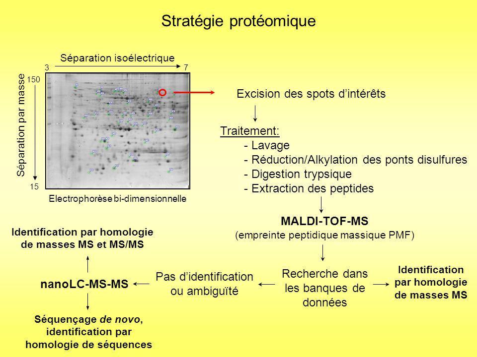 150 15 7 Séparation isoélectrique 3 Séparation par masse Electrophorèse bi-dimensionnelle Stratégie protéomique Excision des spots dintérêts Identification par homologie de masses MS nanoLC-MS-MS Traitement: - Lavage - Réduction/Alkylation des ponts disulfures - Digestion trypsique - Extraction des peptides Pas didentification ou ambiguïté MALDI-TOF-MS (empreinte peptidique massique PMF) Recherche dans les banques de données Séquençage de novo, identification par homologie de séquences Identification par homologie de masses MS et MS/MS Stratégie utilisée lorsque le génome nest pas séquencé
