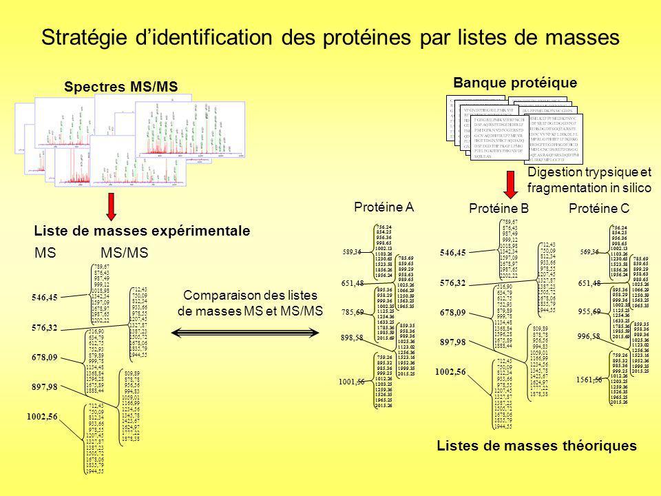 Identification de la protéine B Stratégie didentification des protéines par listes de masses