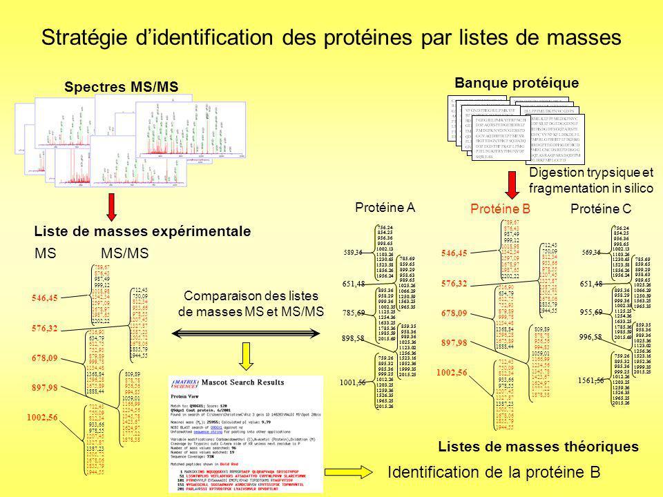 Identification de la protéine impossible avec les recherches classiques par comparaison de listes de masses dans les banques de protéines 90% d homologie MSASETTSASASRGLSYRDFDVDIEAGDALVDVIKPFAKRTLRENHKM GIGGFGALFEISKKYQEPVLVSMTDGVGTKLKPAFALNRHDTVGQDLV ATSVNDILVQGAEPLFFEDYFACGKLDVETAATVIKGIAQGCEAAGCAL IGGETAEMPSSYPAGEYDQDFFAVGAVEKRKIIDGTTIACGDVVLGCVS SGAHSNGYSLVRKIIEVSRPDLNADFHGQRLQDAIMAPTRIYVKPLLALI WKLPVKGMAHITGGGLVENVPRVDRAYVTAVLHQDAWTLPPLFQWLQ KAGNVADDEYHRVFNCGIGMFDIVSAADAPAAIAHLKDAGETVYCVGEI Protéine présente dans les banques protéiques Elongation factor de Cenibacter arsenoxidans Protéine étudiée absente des banques de données MSASETPSASASRGLSYRDAGVDIEAGDALVDRIKPFAKRTLREGVLG GIGGFGALFEISKKYQEPVLVSGTDGVGTKLKLAFALNRHDTVGQDLV AMSVNDILVQGAEPLFFLDYFACGKLDVDTAATVIKGIAQGCELAGCAL IGGETAEMPSMYPAGEYDLAGFAVGAVEKRKIIDGTTIACGDVVLGLAS SGAHSNGYSLVRKIIEVSRPDLNADFHGQRLQDAIMAPTRIYVKPLLALI DKLPVKGMAHITGGGLVENVPRVLPEGVTAVLHQDAWTLPPLFQWLQ KAGNVADDEMHRVFNCGIGMIVIVSAADAPAAIAHLKDAGETVYQIGEIRI Elongation factor de Ralstonia solanacearum Particularité de cette étude : Le génome de Cenibacter arsenoxidans nétait pas séquencé les protéines absentes des banques de données