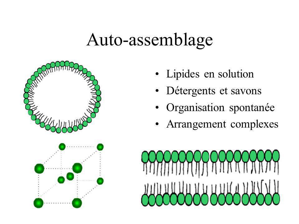 Auto-assemblage Lipides en solution Détergents et savons Organisation spontanée Arrangement complexes