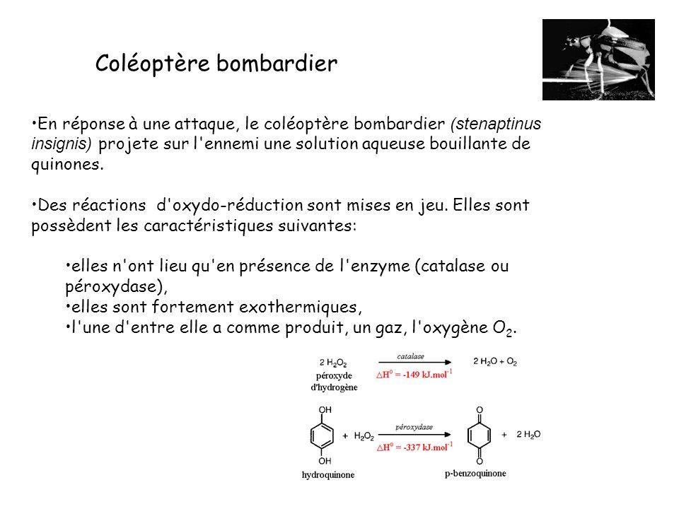 En réponse à une attaque, le coléoptère bombardier (stenaptinus insignis) projete sur l'ennemi une solution aqueuse bouillante de quinones. Des réacti